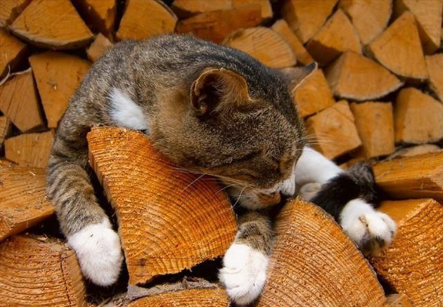 Кот на дровах