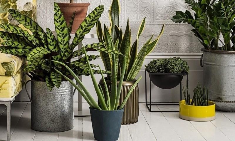 5 комнатных растений, которые лучше всего очищают воздух